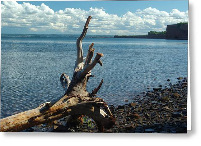 Minas Basin Greeting Cards - Reach For The Sky Greeting Card by George Cousins