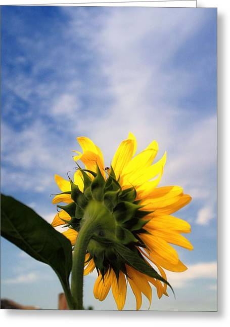 Photogrpah Greeting Cards - Reach For The Sky Greeting Card by Lynnette Johns