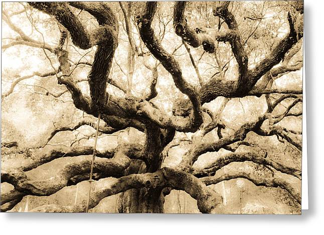 Angel Oak Photographs Greeting Cards - Reach  Greeting Card by Sabrina  Hall