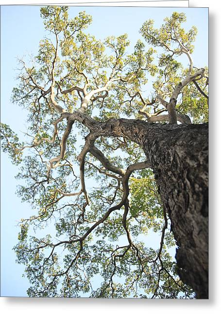 Unique View Greeting Cards - Reaching for the Sky Greeting Card by Brandon Tabiolo - Printscapes