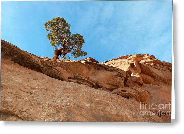 Slickrock Greeting Cards - Reaching for the Sun Greeting Card by Bob and Nancy Kendrick