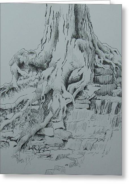 Tree Roots Drawings Greeting Cards - Reaching for the Water Greeting Card by Ramona Kraemer-Dobson