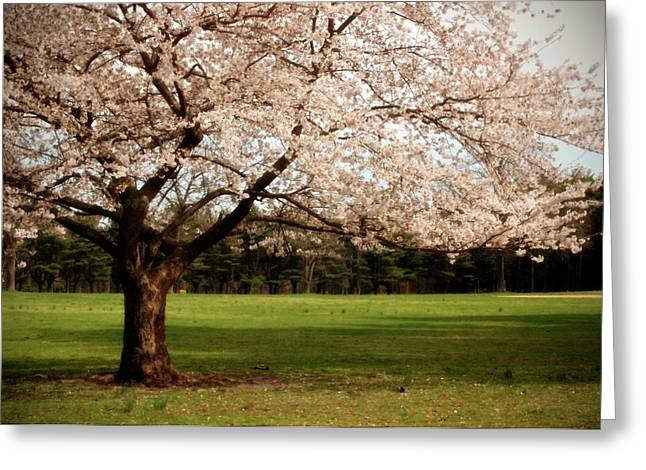 Tress Posters Greeting Cards - Reaching Out - Ocean County Park Greeting Card by Angie Tirado