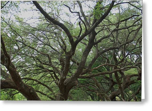 Reaching Out Greeting Card by Aimee L Maher Photography and Art Visit ALMGallerydotcom
