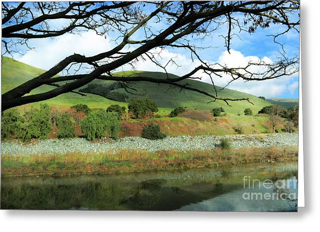 Branch Hill Greeting Cards - Reaching Out Greeting Card by Ellen Cotton