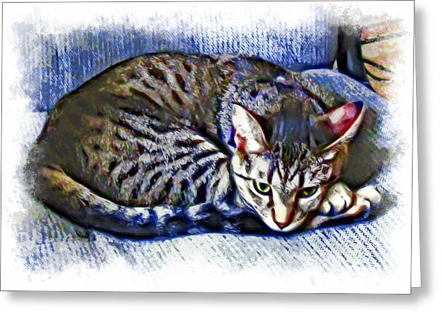 Grettings Greeting Cards - Ready For Napping Greeting Card by David G Paul