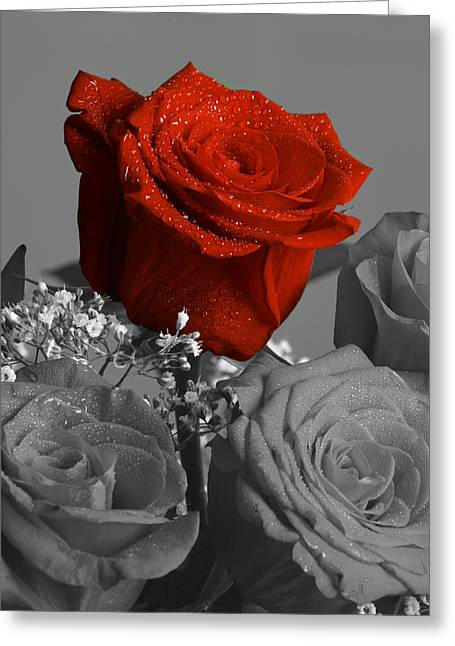 Plant Stretched Canvas Greeting Cards - Really red Rose Greeting Card by M K  Miller