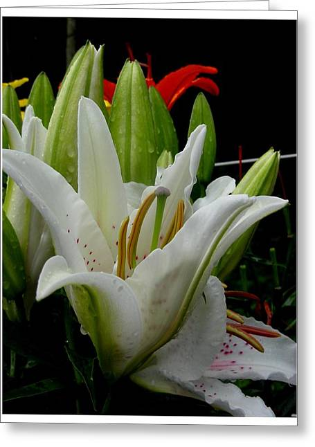 Day Lilly Greeting Cards - Receptive but waiting Greeting Card by Frank Wickham