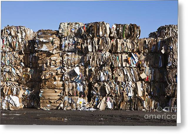 Cardboard Greeting Cards - Recycling Facility Greeting Card by Paul Edmondson