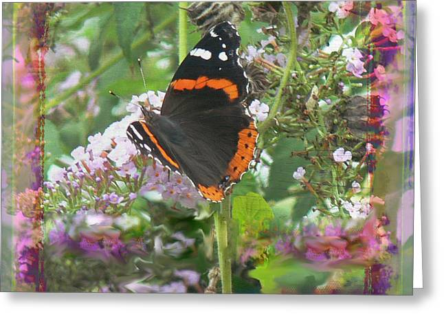 Tn Digital Art Greeting Cards - Red Admiral Greeting Card by EricaMaxine  Price