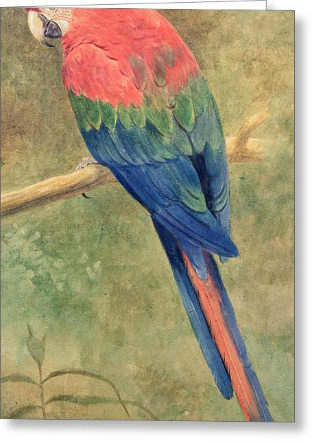 Blue Claws Greeting Cards - Red and Blue Macaw Greeting Card by Henry Stacey Marks