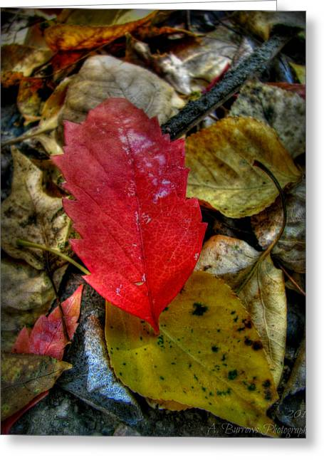 Prescott Greeting Cards - Red and Gold Greeting Card by Aaron Burrows