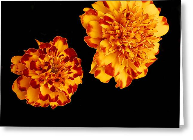 Flower Still Life Pyrography Greeting Cards - Red And Yellow Greeting Card by Barry Shaffer