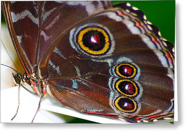 Red And Yellow Eyes Greeting Card by Scott Hovind