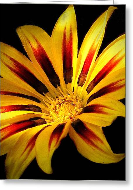 Mikki Cucuzzo Greeting Cards - Red and Yellow flower Greeting Card by Mikki Cucuzzo