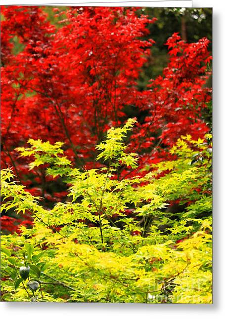Red Leaves Mixed Media Greeting Cards - Red And Yellow Leaves Greeting Card by James Eddy