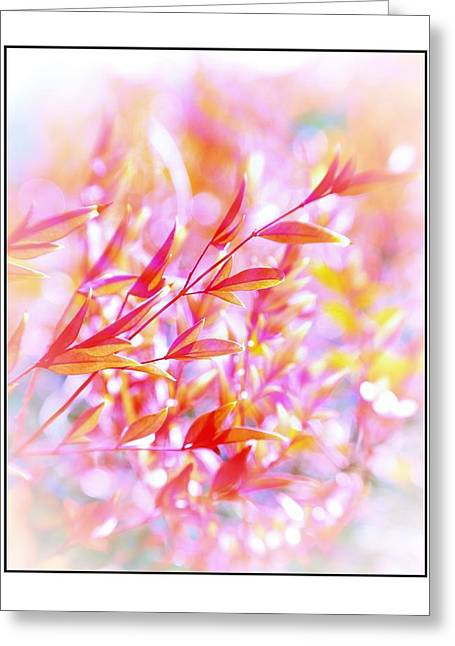 Red And Yellow Leaves Greeting Card by Judi Bagwell