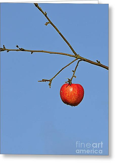 Apple Pyrography Greeting Cards - Red apple Greeting Card by Conny Sjostrom