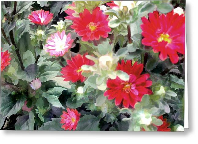 Red Asters Greeting Card by Elaine Plesser