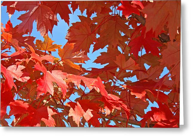 Autumn Art Greeting Cards - RED AUTUMN LEAVES Fall Colors Art Prints Baslee Troutman Greeting Card by Baslee Troutman Art Prints Collections