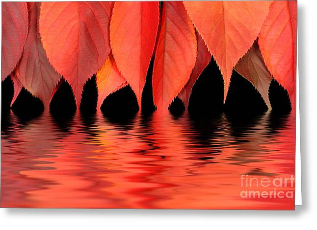Turning Leaves Greeting Cards - Red autumn leaves in water Greeting Card by Simon Bratt Photography LRPS