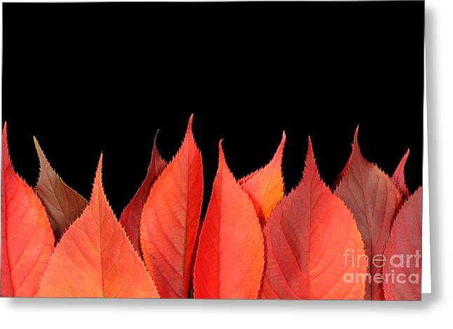 Turning Leaves Greeting Cards - Red autumn leaves on edge Greeting Card by Simon Bratt Photography LRPS