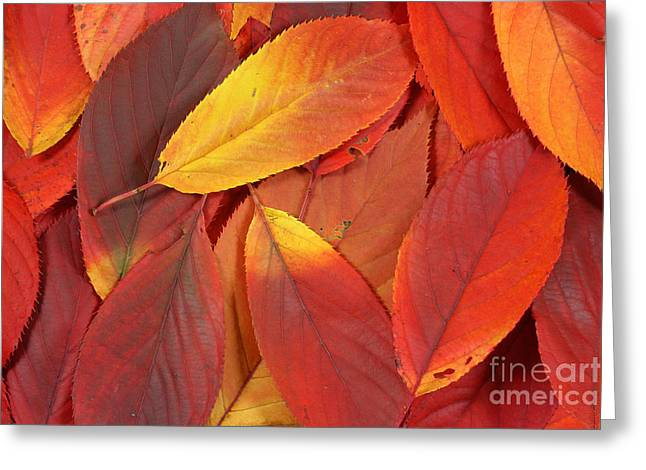 Turning Leaves Greeting Cards - Red autumn leaves pile Greeting Card by Simon Bratt Photography LRPS