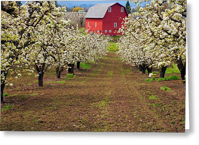 Hood River Greeting Cards - Red Barn Avenue Greeting Card by Mike  Dawson