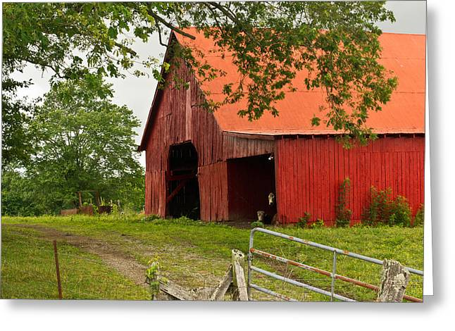 Tin Roof Greeting Cards - Red Barn with Orange Roof 1 Greeting Card by Douglas Barnett