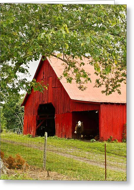 Tin Roof Greeting Cards - Red Barn with Pink Roof Greeting Card by Douglas Barnett