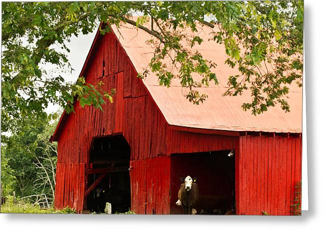Red Barn with Pink Roof Greeting Card by Douglas Barnett