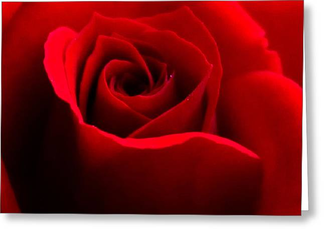 Red Beauty Greeting Card by Rebecca Frank