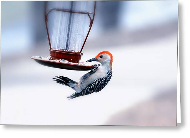 Bird-feeder Greeting Cards - Red-Bellied on Feeder Greeting Card by Bill Tiepelman