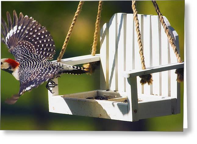 Feeding Digital Greeting Cards - Red-Bellied Woodpecker in Flight Greeting Card by Bill Tiepelman