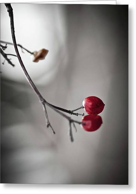 Dried Greeting Cards - Red Berries Greeting Card by Mandy Tabatt