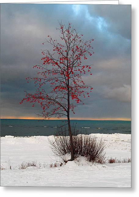 Uncommen Greeting Cards - Red Berry Tree Greeting Card by Cyryn Fyrcyd