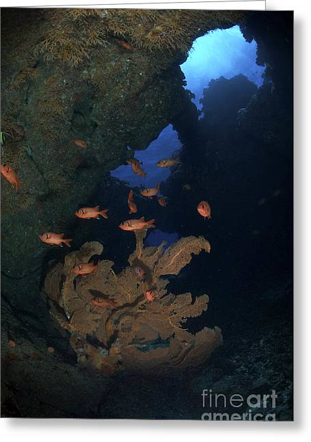 Water In Caves Greeting Cards - Red Bigeye Fish And Sea Fan In An Greeting Card by Mathieu Meur