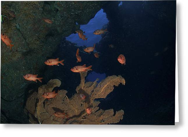 Red Bigeye Fish And Sea Fan In An Greeting Card by Mathieu Meur
