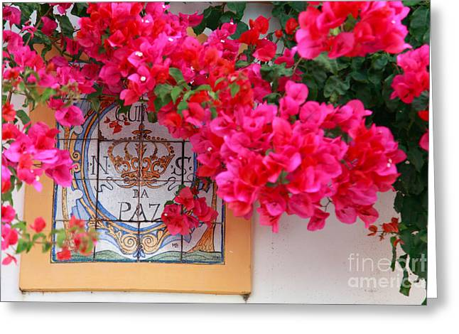 Caryophyllales Greeting Cards - Red bougainvilleas Greeting Card by Gaspar Avila