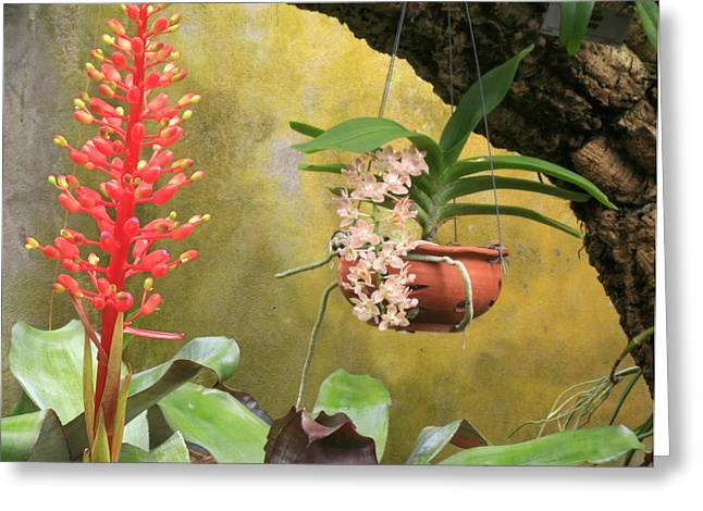 Stephen Mack Greeting Cards - Red Bromeliad with Hanging Orchids Greeting Card by Stephen Mack