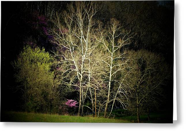 Red Bud Trees Greeting Cards - Red Bud and Trees Greeting Card by Michael L Kimble