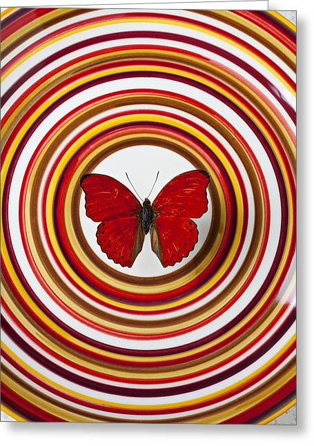 Nature Center Greeting Cards - Red butterfly on plate with many circles Greeting Card by Garry Gay