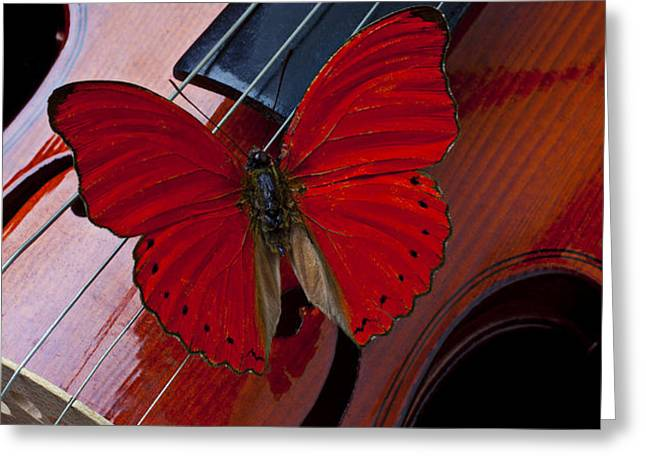 Red Butterfly On Violin Greeting Card by Garry Gay