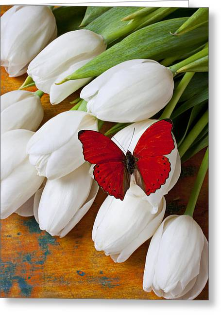 Fragile Greeting Cards - Red butterfly on white tulips Greeting Card by Garry Gay
