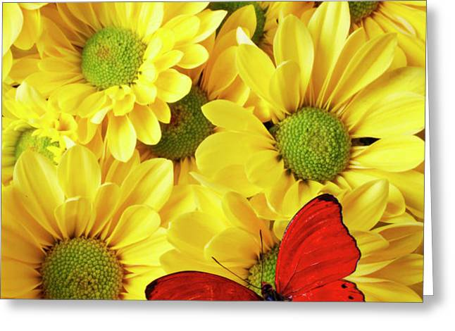 Red butterfly on yellow mums Greeting Card by Garry Gay