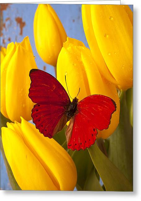 Red Leaves Greeting Cards - Red butterful on yellow tulips Greeting Card by Garry Gay