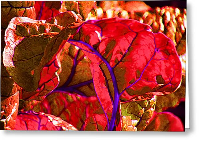 Red Chard Greeting Card by Rory Sagner