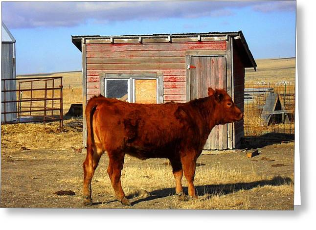 Cattle-shed Greeting Cards - Red Greeting Card by Clarice  Lakota