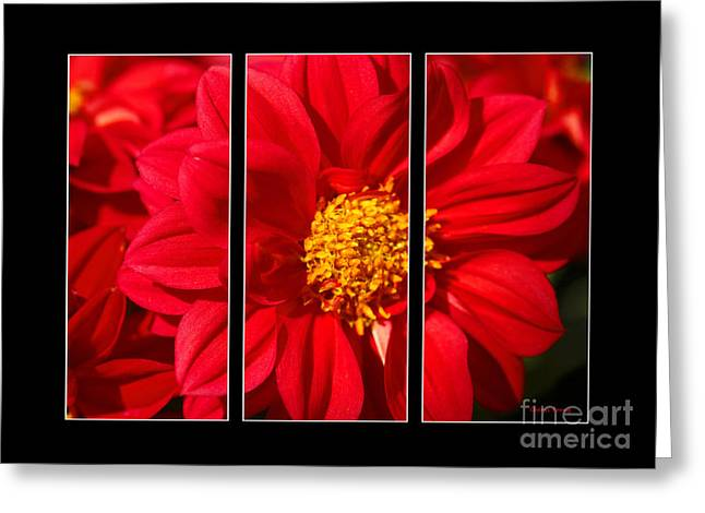 Wall Art For Your Home Or Office Greeting Cards - Red Dahlia Triptych Greeting Card by Cheryl Young
