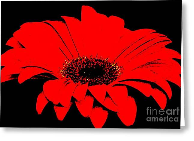 Black Top Greeting Cards - Red Daisy On Black Background Greeting Card by Marsha Heiken